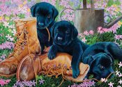 CH58851 Black Lab Puppies (35b Tray)